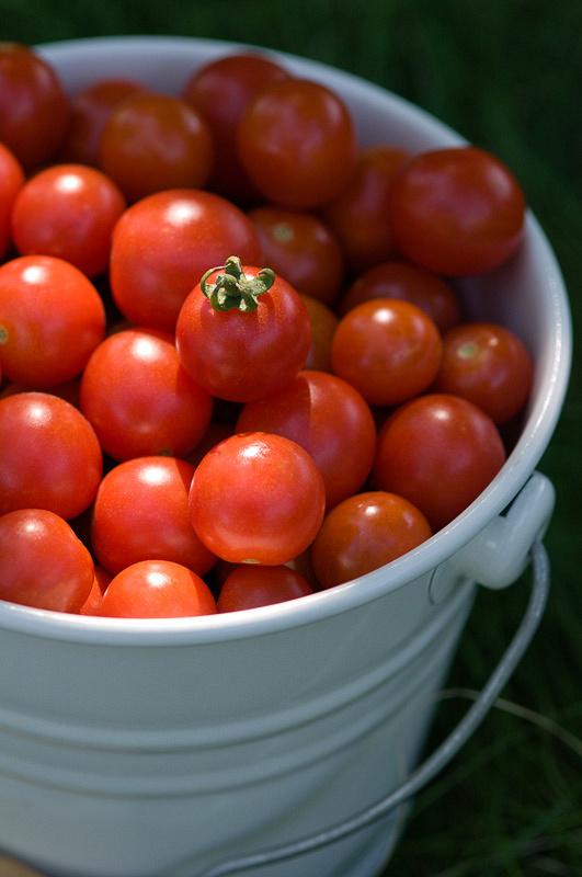 Небольшое ведро помидоров черри