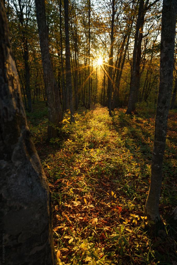 Восход в лесу