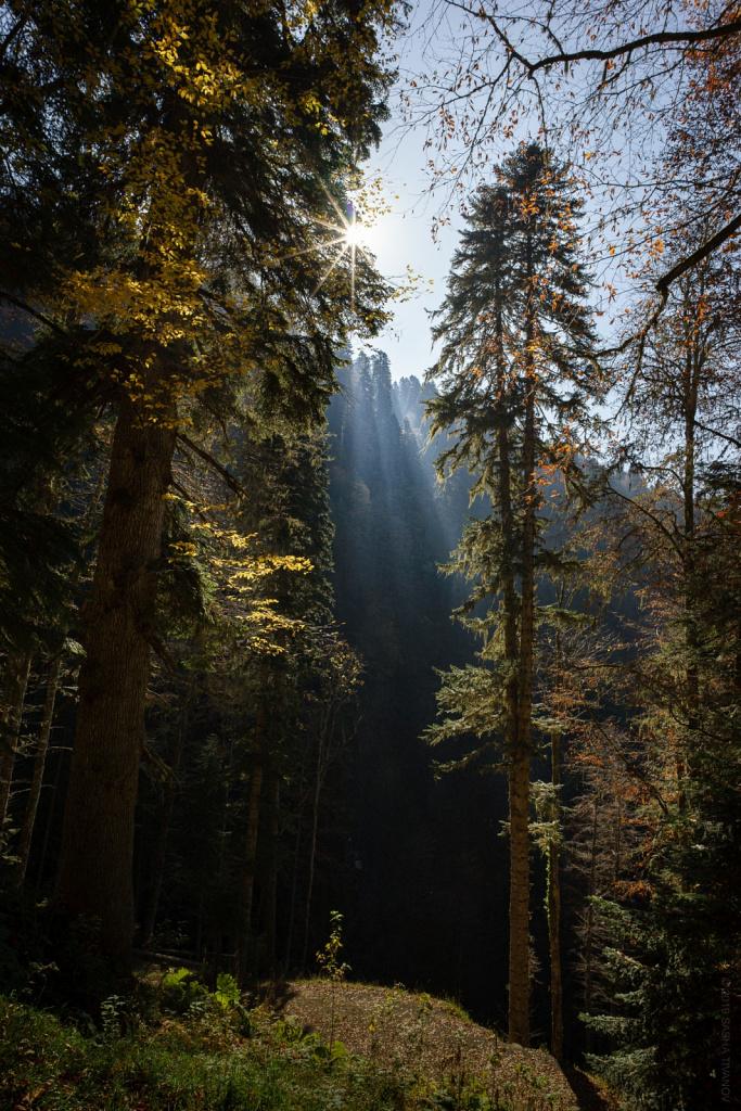 Утро в старом лесу